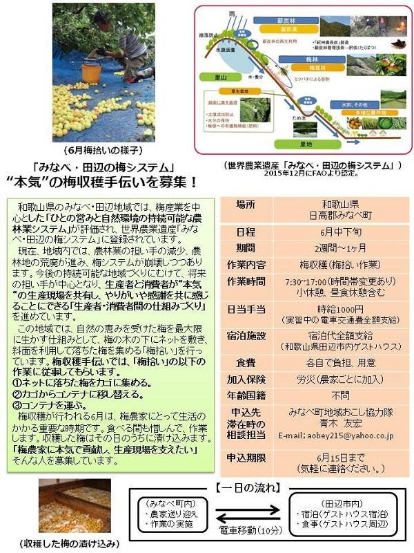 180613_みなべ梅収穫募集 (1).jpg