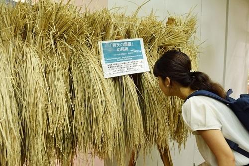 パソナ農園隊さん(7).jpg
