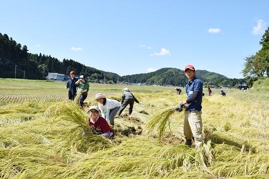稲刈り2017_02.jpg