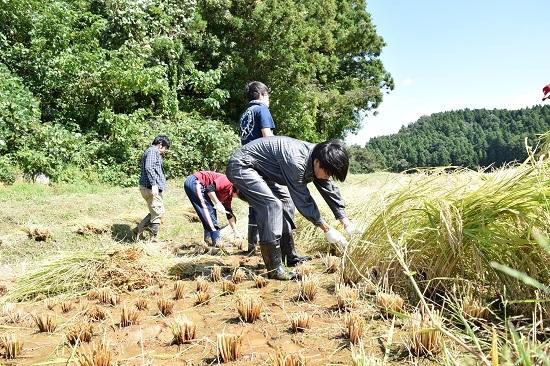 稲刈り2017_04.jpg