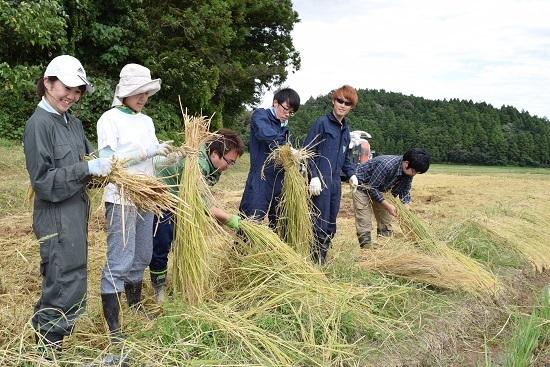 稲刈り2017_05.jpg