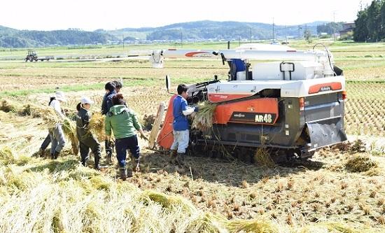 稲刈り2017_06.jpg
