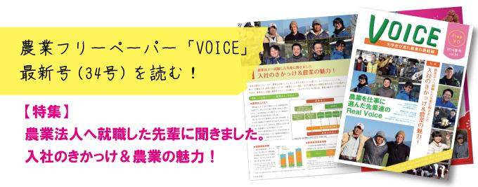 voice34号.jpg